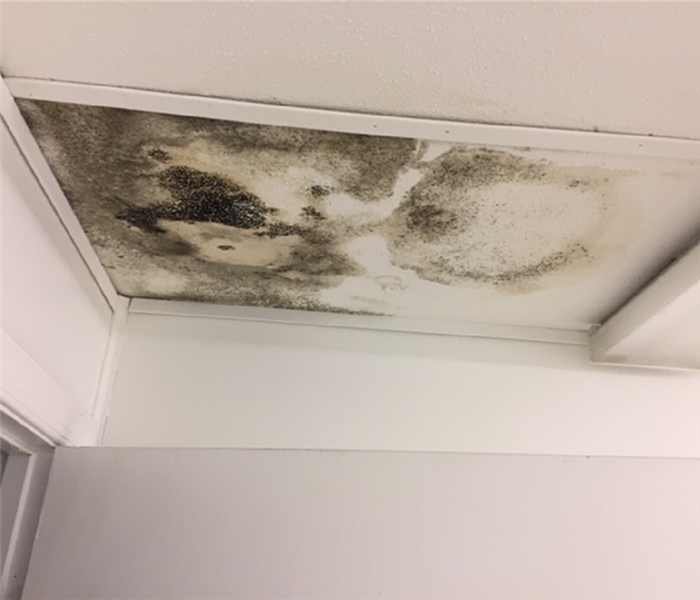 Mold Found in Portable Trailer